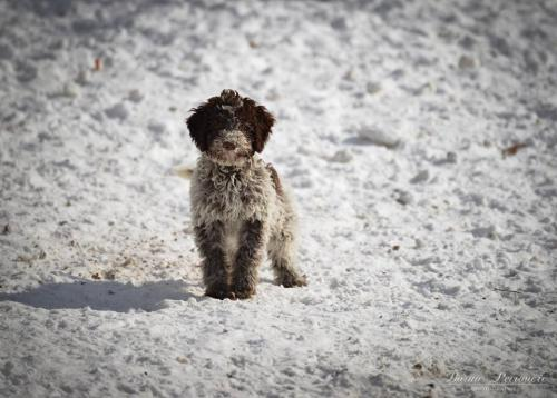 Lagotto's Peak Litter I (21.10.2018)